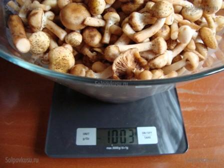 грибы кубари фото